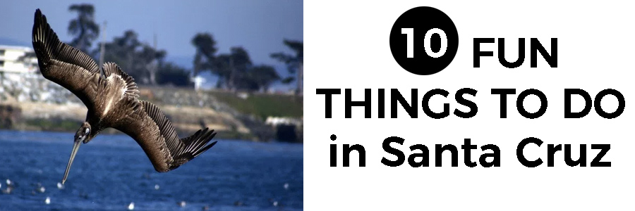 10 fun things to do in Santa Cruz