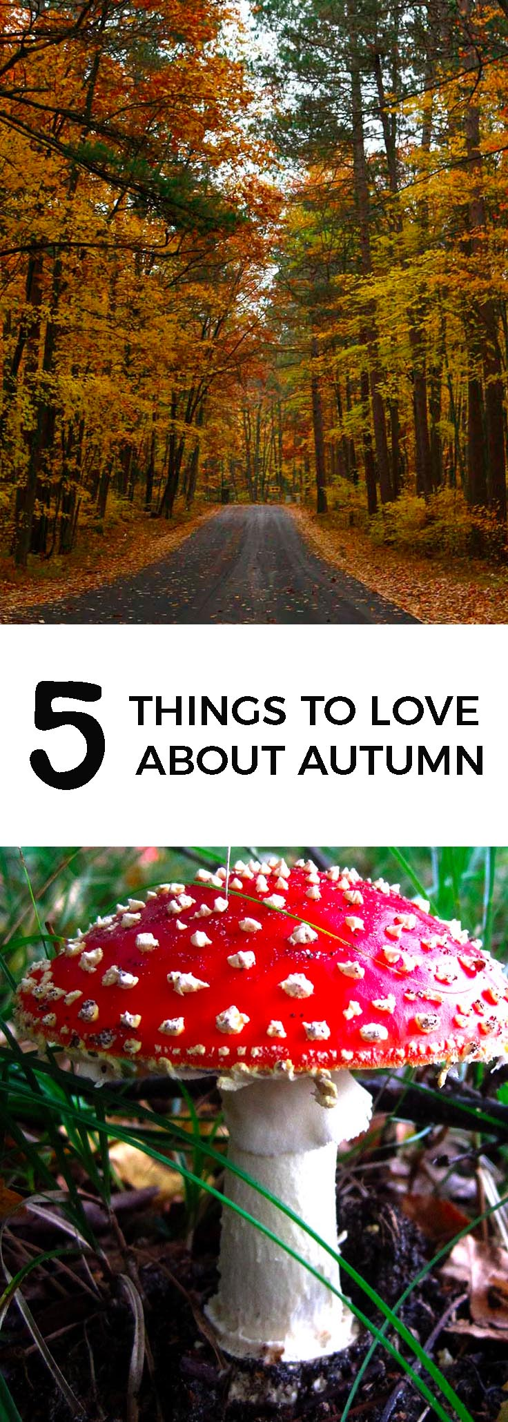 Five things to love about autumn - theweekendguide.com