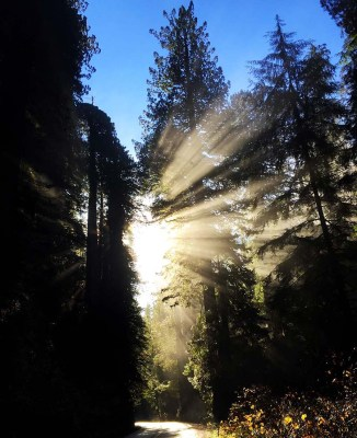 How (and Why) to Try Forest Bathing