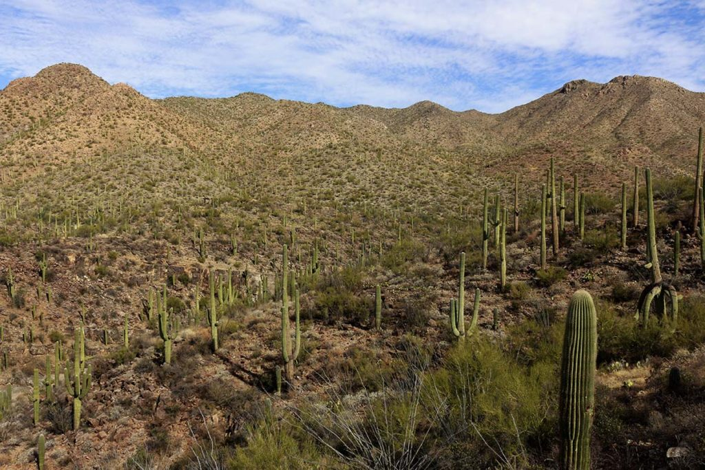 Things to Do in Saguaro National Park Weekend Guide to Saguaro National Park : Best things to do and see AZ : There are many things to do in Saguaro National Park including hiking, cycling and photography. The city of Tucson also has fantastic places to eat and drink.