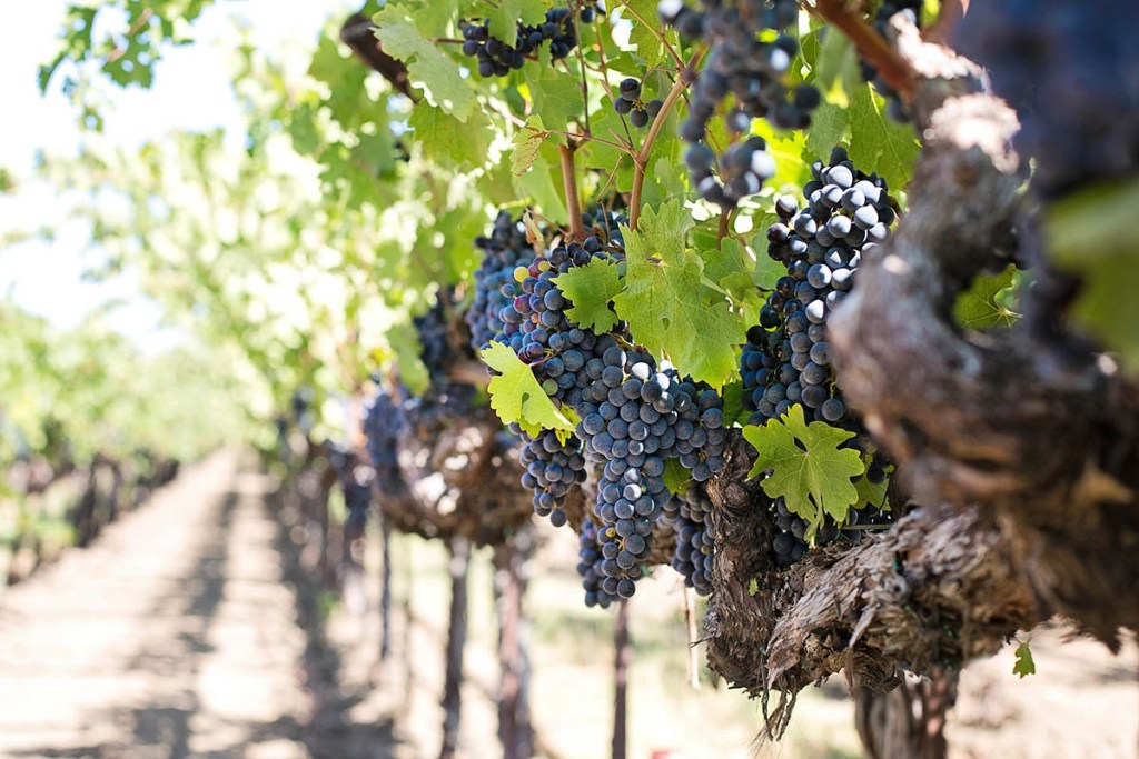 Amazing Day Trips from Santa Barbara : explore cute towns, beaches, wineries & more