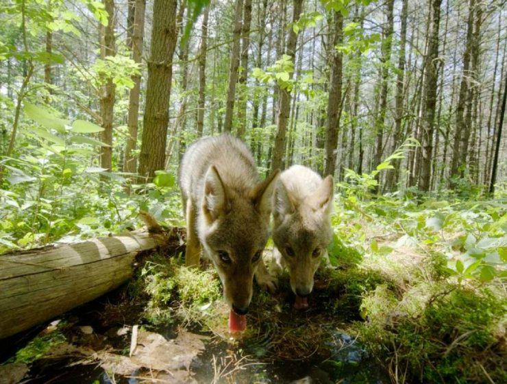 Screening of Backyard Wilderness at the Jacob Burns Film Center+ a Giveaway!
