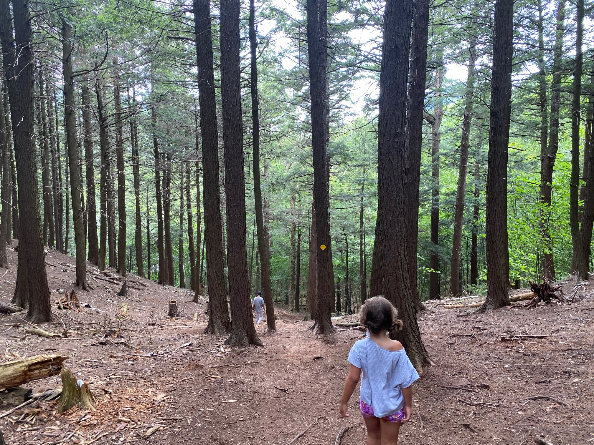 High Falls Gorge nature trail