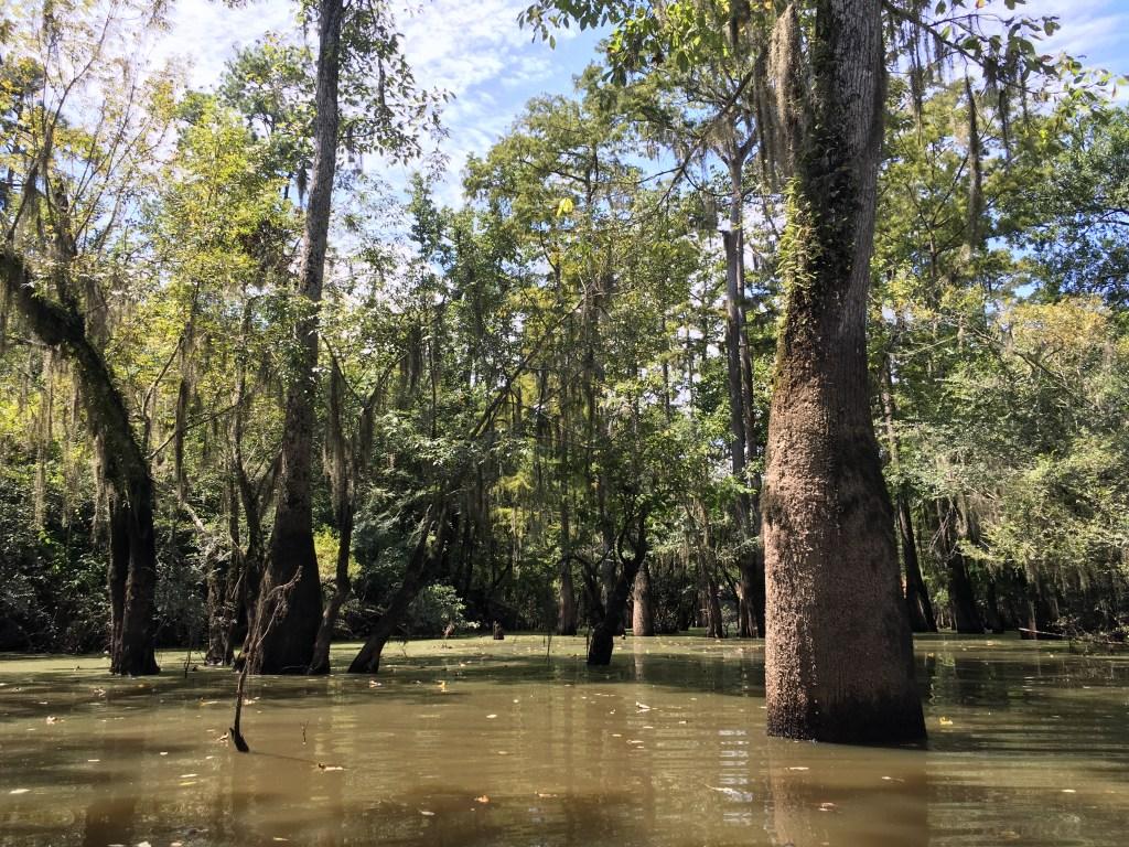 swamp-tour-new-orleans-2