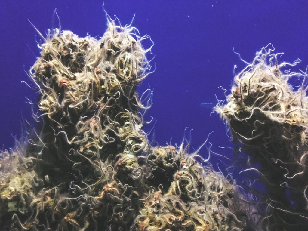 Monterey Bay Aquarium | TheWeekendJetsetter.com