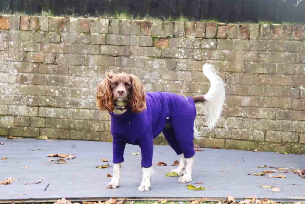 equafleece for dogs