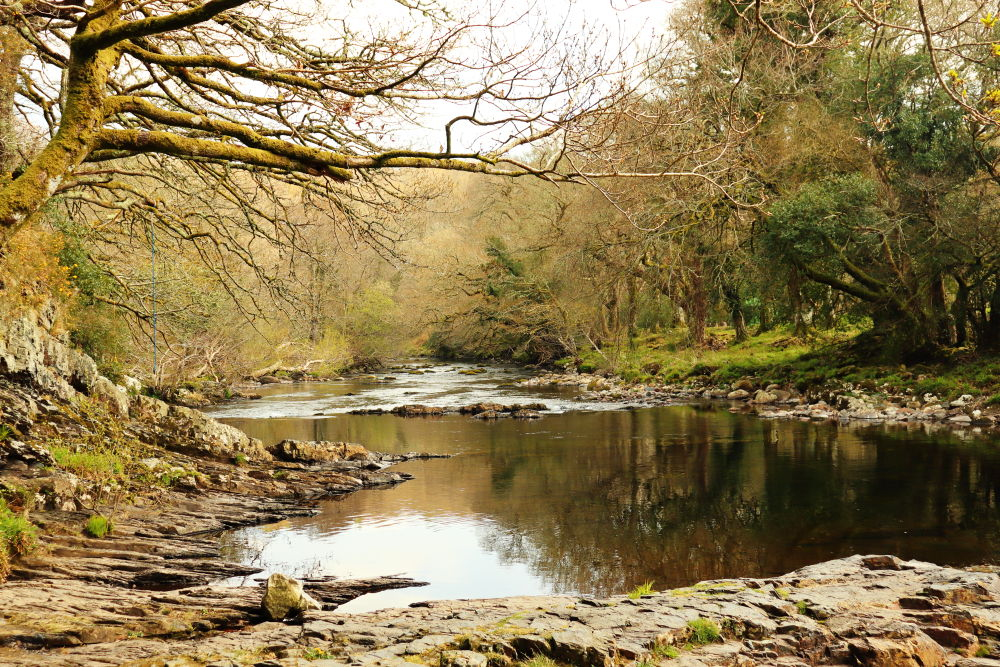 River Dart at Spitchwick