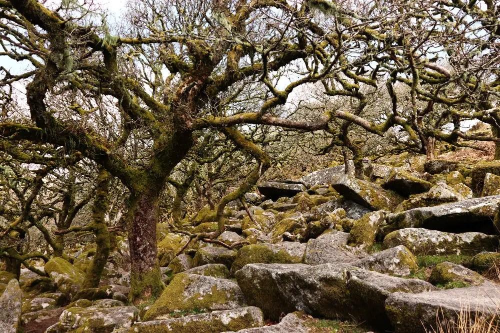 Wistmans Wood Boulders