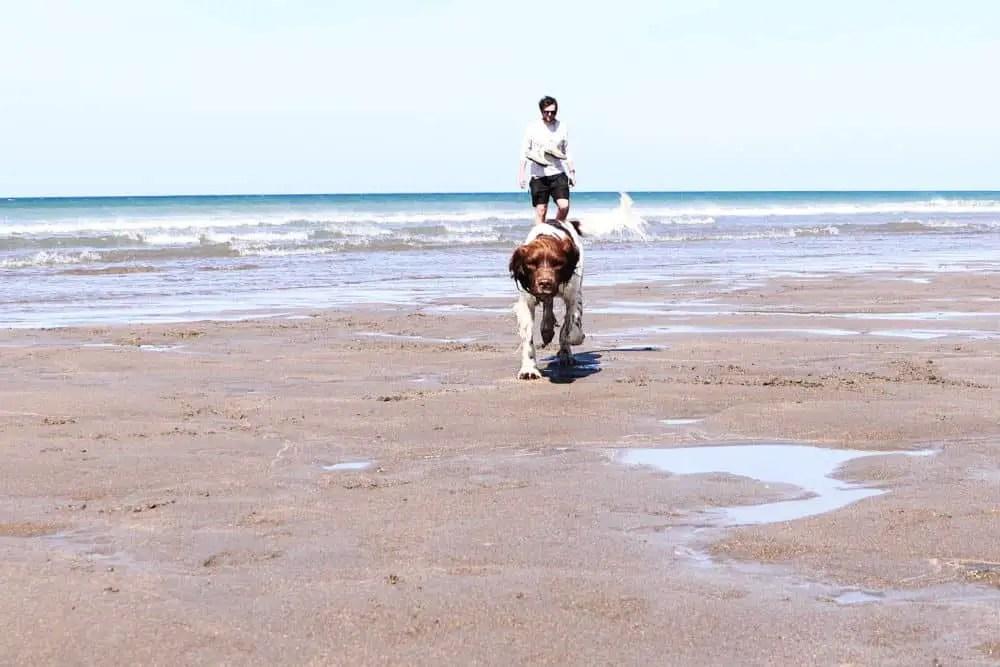Enjoying Widemouth Bay with the dog