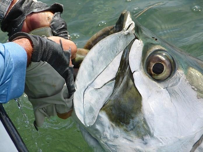 0427colfish2 web
