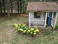 Daffodils & Playhouse