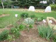 Vegetable/Flower Garden