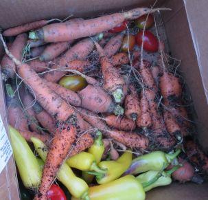 Last Carrots