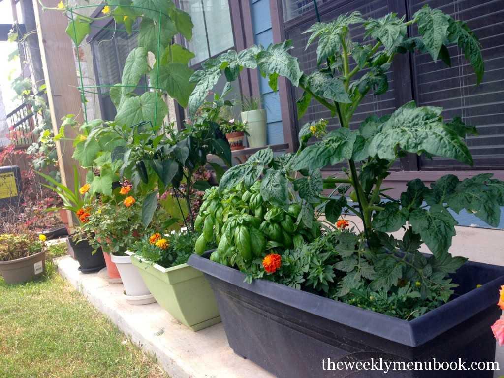 Urban Patio Garden in Austin, TX