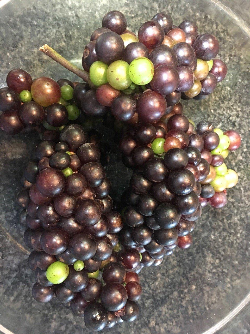 Zinfandel Grape Sauce