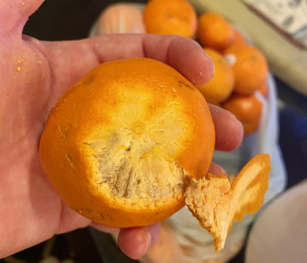 Peeling Organic Mandarin Oranges