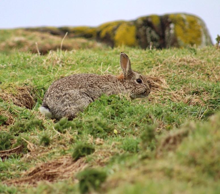 Isle of May wildlife