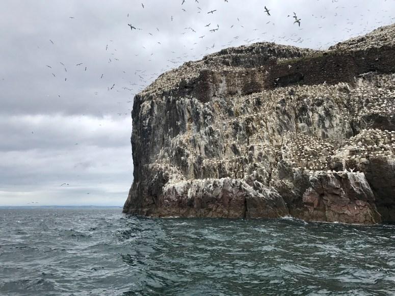 Bass Rock cruise