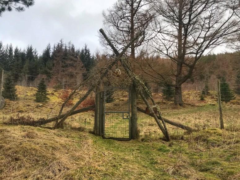Millennium Wood. Straloch Estate