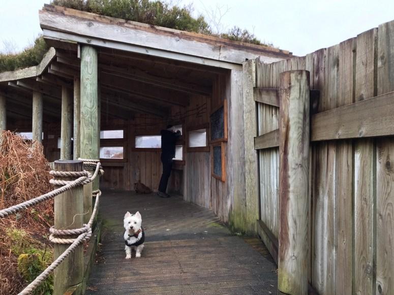 Garbh Eilean Wildlife Hide, Ardnamurchan
