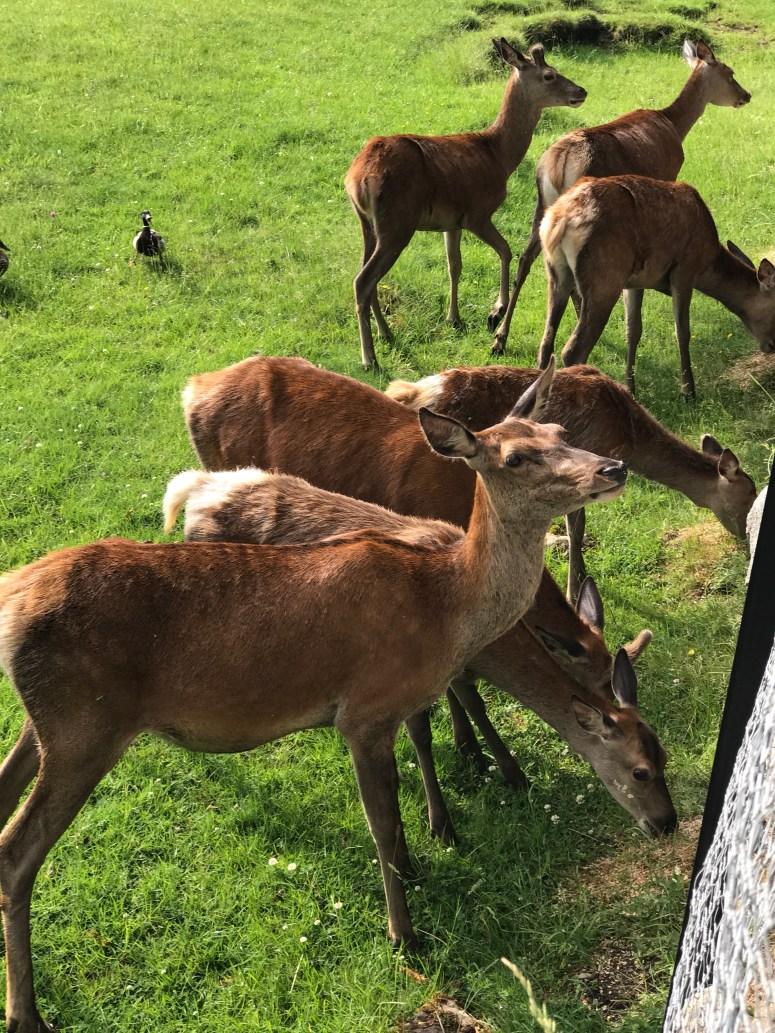 Blair Castle, Deer Park