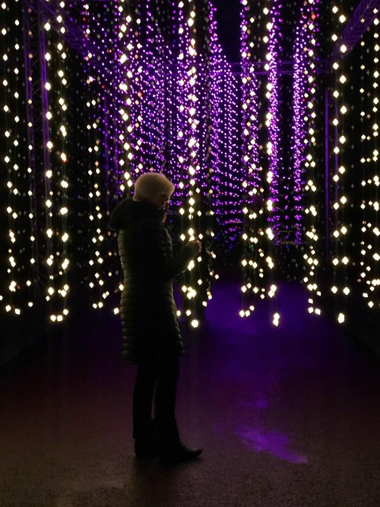 Christmas at the Botanics, Edinburgh