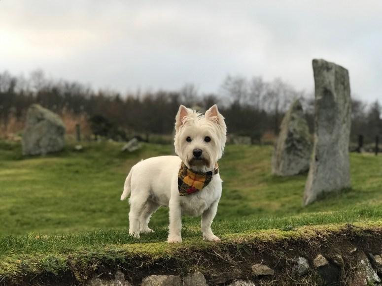 East Aquhorthies Stone Circle
