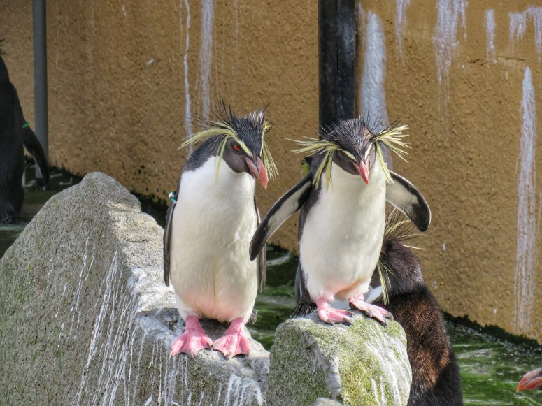 Penguins, Edinburgh Zoo