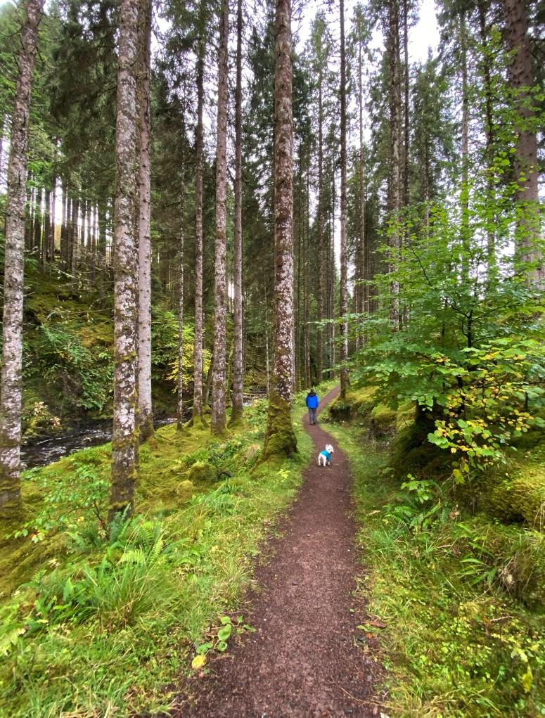 Glengarry Forest, Scottish Highlands