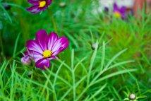 purple_flowers_by_millystargazer-da4pa5a