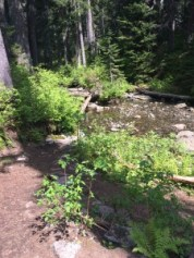 Denny Creek crossing