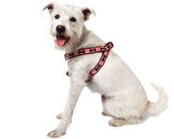 stripe-bone-harness