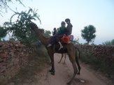 Camel Crew Badasses