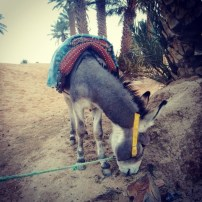 And he bought a donkey named Fajita. The two of them are currently somewhere along the Algerian border. Good luck sirs!