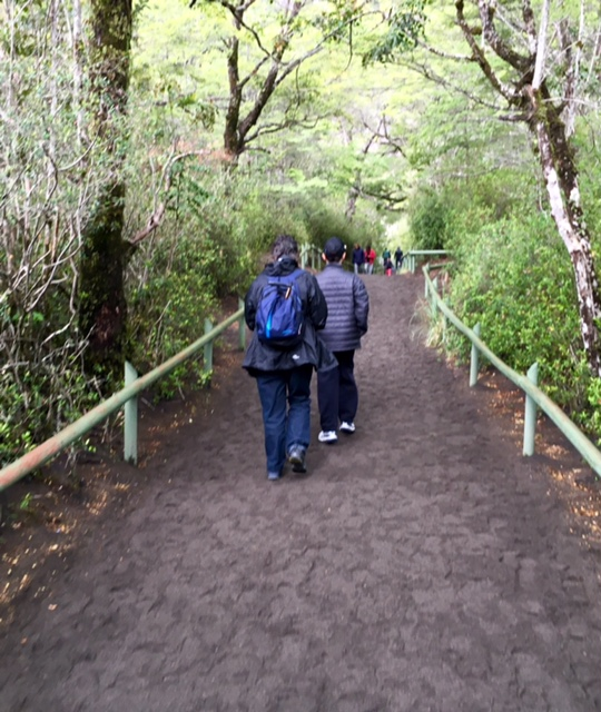 My travel companions heading into the rainforest across the volcanic carpet (Lake district)