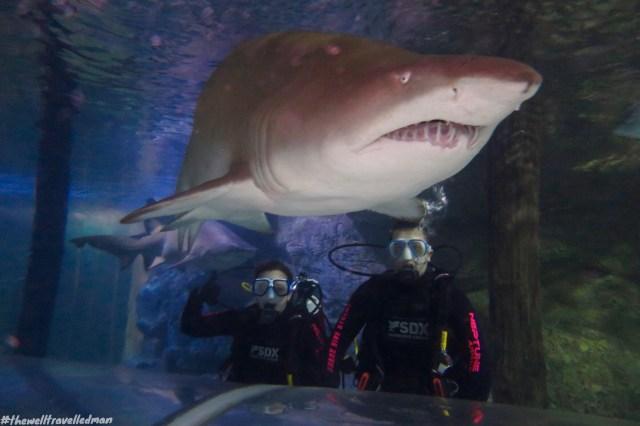 thewelltravelledman manly sea life shark dive xtreme