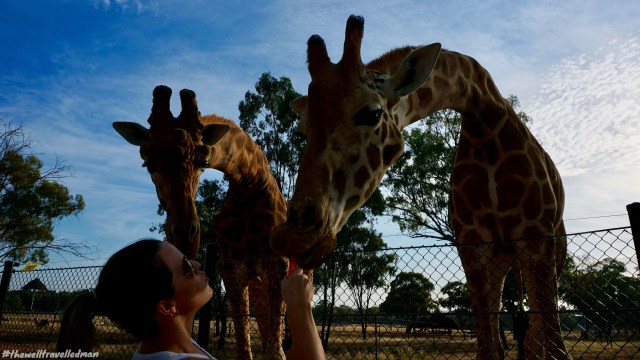 thewelltravelledman taronga western plain zoo zoofari lodge