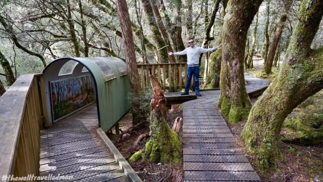 thewelltravelledman enchanted walk cradle mountain tasmania