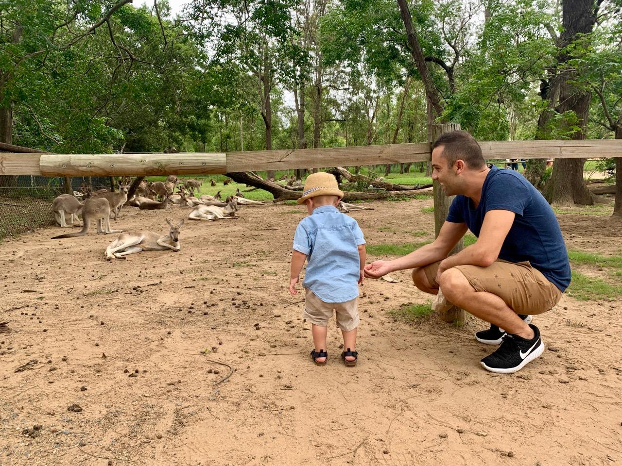 thewelltravelledfamily lone pine koala sanctuary