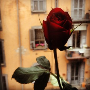 A rose to welcome me