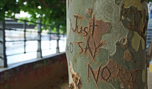 """Just say no"" carved on a tree"