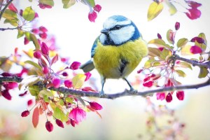 Spring: Moving From A Long, Dark Winter to Restored Hope