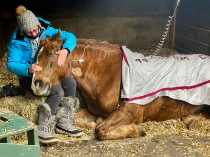 caring for EHV-1 horse