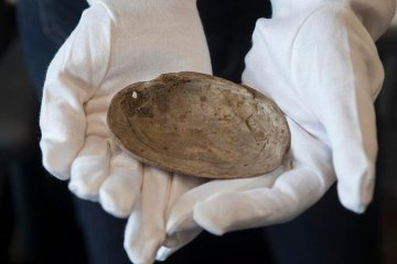 Earliest ever engravings by humans found on 430,000 fossilized mussel shells