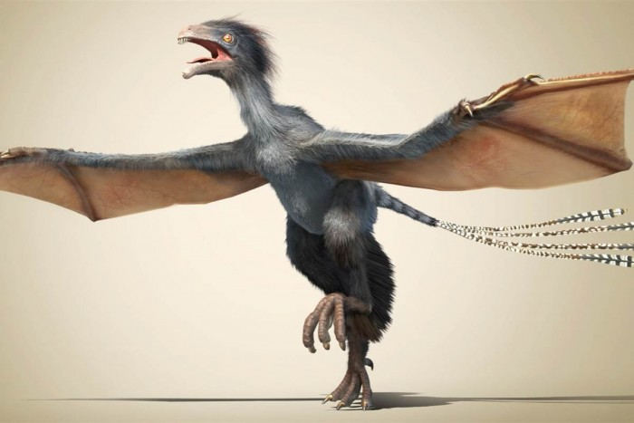 Discovery of Bat-Winged Dinosaur Puzzles Scientists