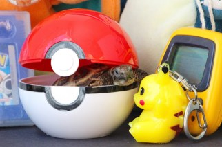 """""""Can Pikachu use his Pokémon powers to get me out of this Poké Ball?"""""""