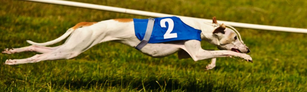 WCRA Whippet Fully Extended