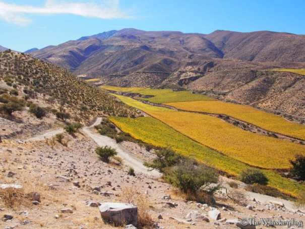 15 Chilean Pisco Facts You Need To Know Right Now - 4