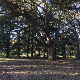 Sinnissipi Park, Sterling IL