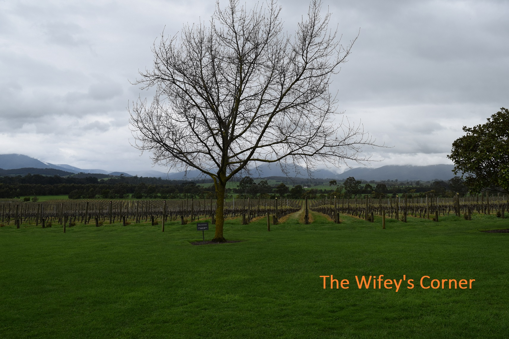Yarra Valley Wine Tasting Tour